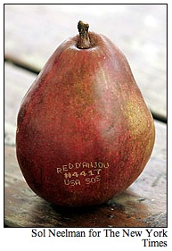 Tattooedpear